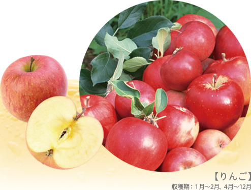 【りんご】収穫期:1月~2月、4月~12月