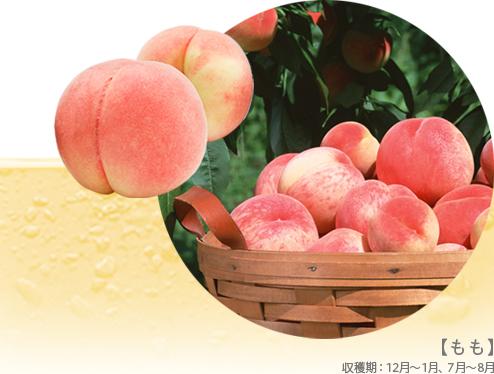 【もも】収穫期:12月~1月、7月~8月