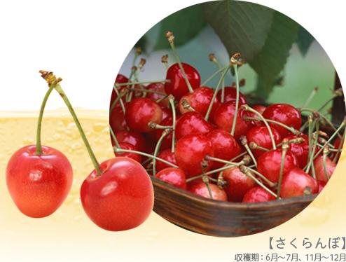 【さくらんぼ】収穫期:6月~7月、11月~12月